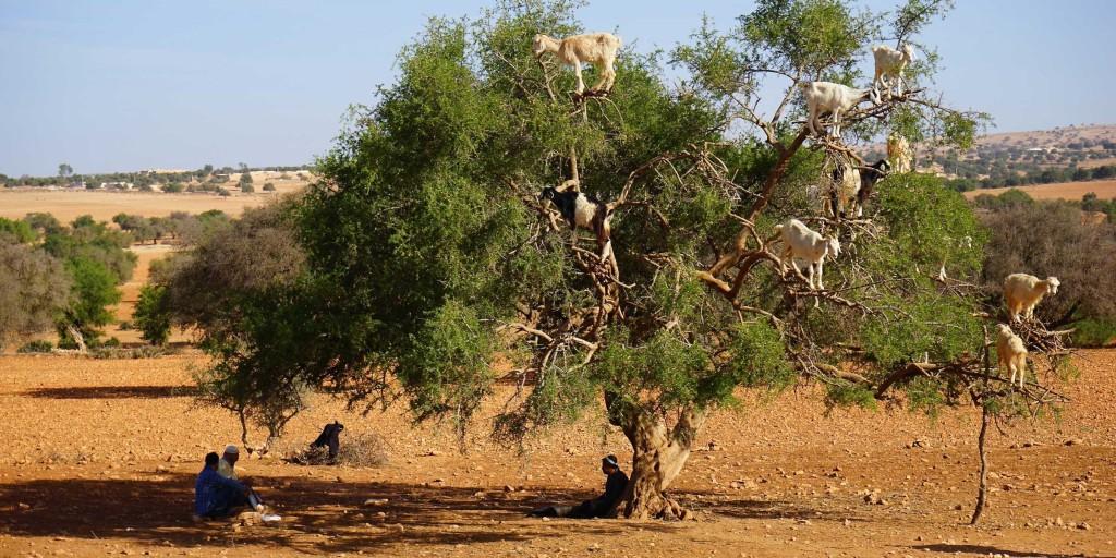 【モロッコ女子旅】アルガンオイルの産地を訪ねる!
